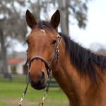 dos_brisas_horse_cher