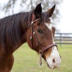 dos_brisas_horse_cuervo