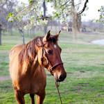 dos_brisas_horse_kiss