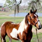 dos_brisas_horse_rascal