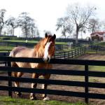 dos_brisas_horse_sampson