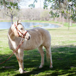 dos_brisas_horse_tikki
