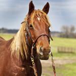dos_brisas_horse_tiller