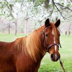 dos_brisas_horse_travis