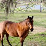dos_brisas_horse_twinkie
