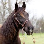 dos_brisas_horse_vadar